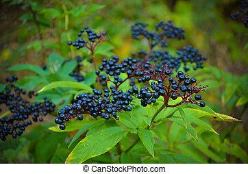 fourmi appareillement noir jardin meadow m le jardin images rechercher. Black Bedroom Furniture Sets. Home Design Ideas
