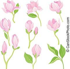 branches, ensemble, fleurs, illustré, vecteur, magnolia, printemps