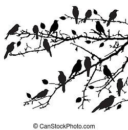 Branches - Vector branches wirh birds