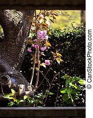 branches, fleur, cerise, double