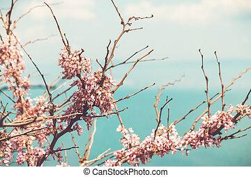 branches, fleur, cerise, ensoleillé, printemps, jour