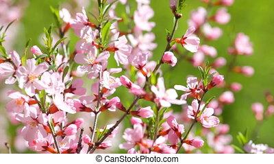 branches, floraison