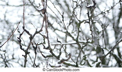 Branches frost snow