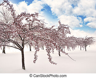 branches, glace, arbres