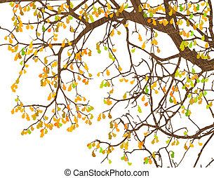 Branches - Illustration of tree branches and autumn leaves