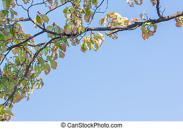 Branches in autumn with sky background.