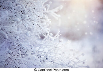 Branches in hoarfrost and snow