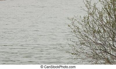 Branches in rippling water in Uzbekistan - A wide, still...