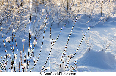 branches in winter
