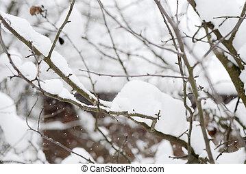 branches, jardin, neige, arbres, couvert, hiver
