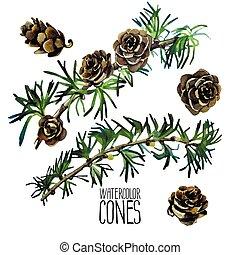 branches, mélèze, aquarelle, cônes