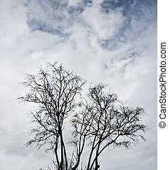 Branches of a big tree in a cloudy sky.