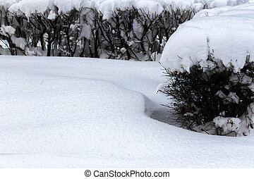 Branches of a bush covered with fluffy white snow