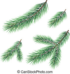 Branches of a Christmas tree - Green branches of a Christmas...