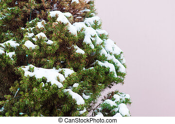 branches of a Christmas tree in the snow