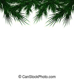 branches of a Christmas tree on a white background