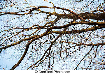 branches of a tree