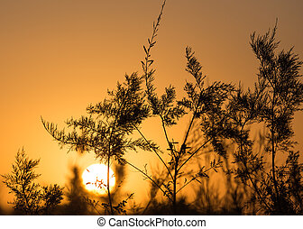 branches of a tree at sunset