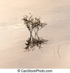branches of a tree in a lake at sunset