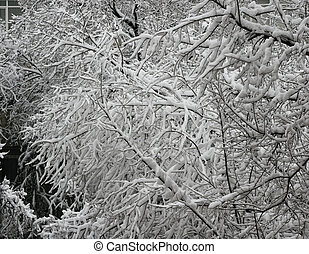 branches of a tree in fluffy snow