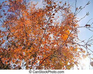 Branches of a tree in the autumn
