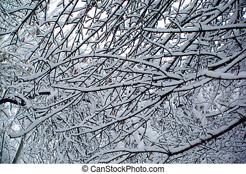 branches of a tree in the snow
