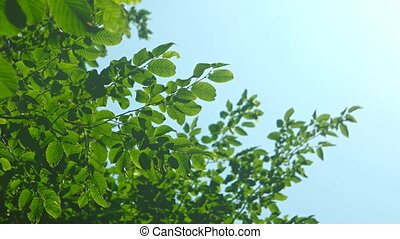 Branches of a tree with leaves swaying against the clear sky