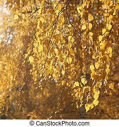 Branches of a tree with yellow autumn leaves