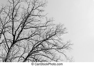 Branches of a tree without leaves against the sky.