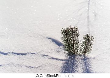 branches of a young tree in the snow