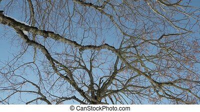 branches of an old tree against a blue sky.