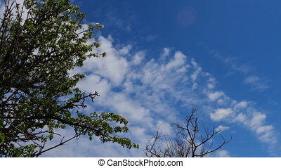 branches of an old tree against a blue sky