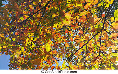 Branches of autumn elm-tree with bright golden leaves