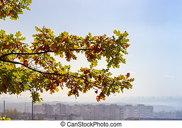 Branches of autumn oak on a blurred background of city