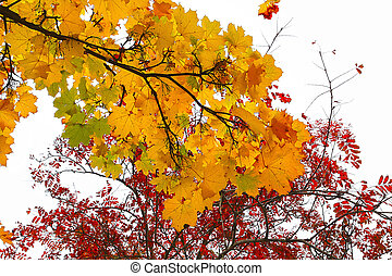 Branches of autumn trees