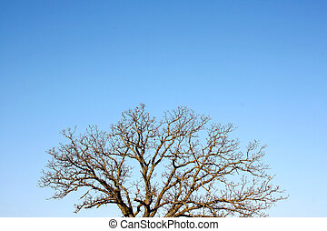 Branches of Bare Winter Tree and Blue Sky Background