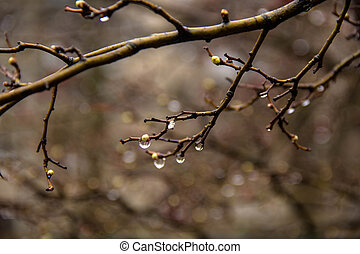Branches of birch with earrings in raindrops on a background