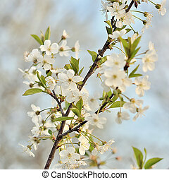 Branches of blossoming tree with flowers