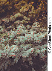 Branches of Blue Spruce Retro