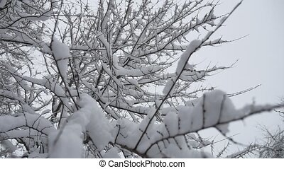 Branches of bushes in snow in the winter in cloudy snow...