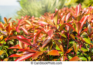 Branches of bushes with young green and red leaves