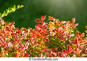 Branches of bushes with young green and red leaves.