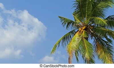 branches of coconut palm against blue sky