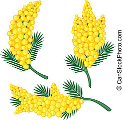 Branches of mimosa