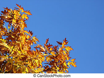 branches of oak tree