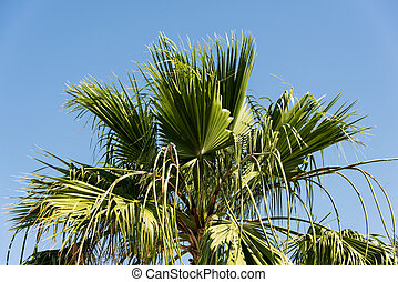 branches of palm trees against the blue sky