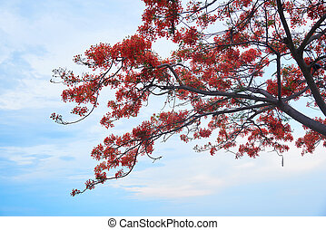 Branches of peacock flowers on blue sky background