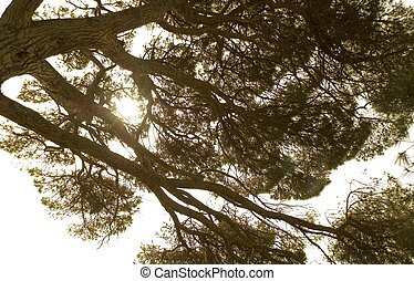Branches of the big tree