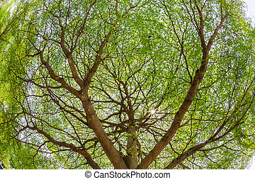 Branches of the tree against sunlight