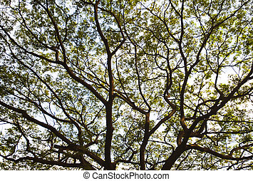 Branches of the tree, background and texture